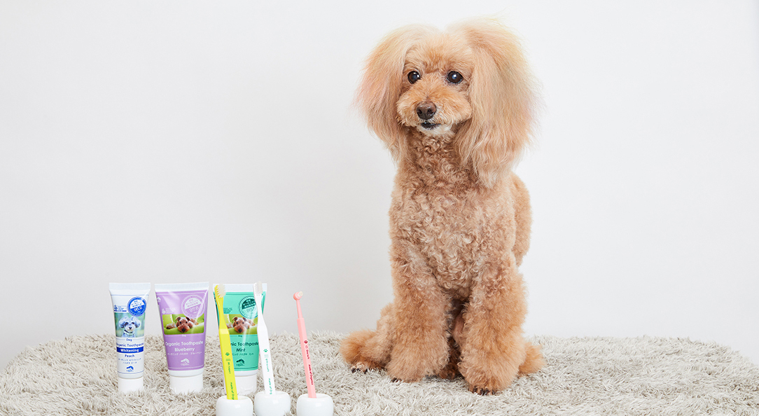 <6月4日は虫歯の日!>愛犬の歯磨きってなぜ大切?