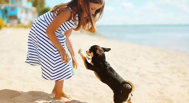 【愛犬の暑さ対策】犬の熱中症を防ぐ方法と暑い時に効く冷感グッズ