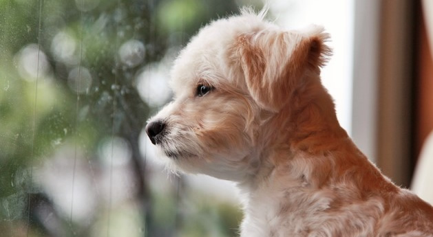 愛犬のために梅雨の時期に注意したい3つのトラブルと雨の中の散歩対策