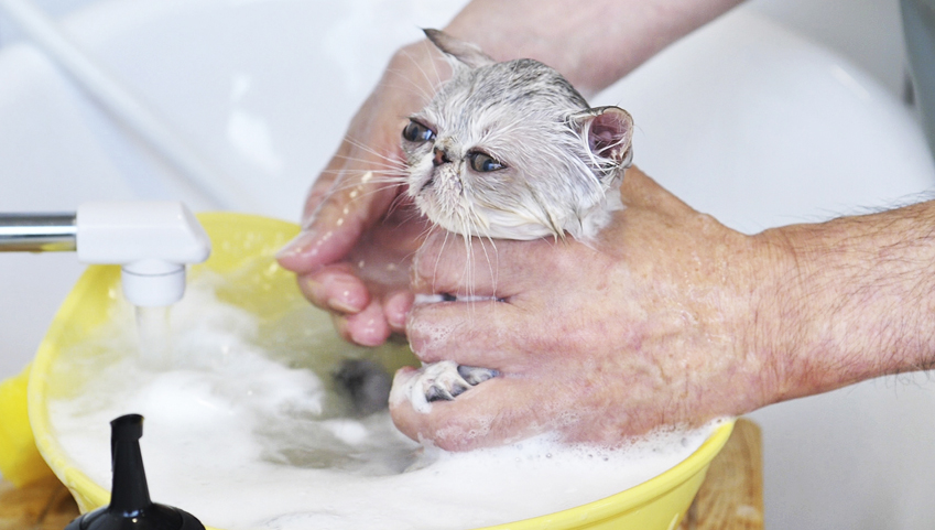 はじめてみよう。おうちで愛猫のシャンプーするときの事前準備について ~中級編~